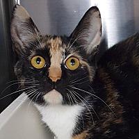 Adopt A Pet :: Picaso - Key Largo, FL