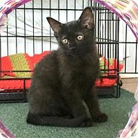 Adopt A Pet :: Joey - Washington, VA