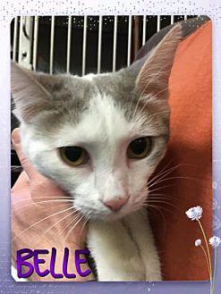 Adopt A Pet :: Belle  - Mt Vernon, IN