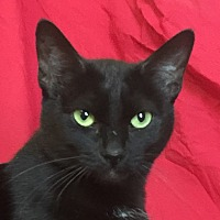 Adopt A Pet :: RUBY - Santa Monica, CA