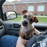 Adopt A Pet :: Prairie Dawn - Fairview Heights, IL