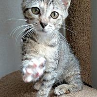 Adopt A Pet :: Nibbles - Tampa, FL