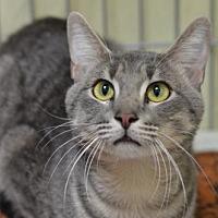 Adopt A Pet :: Peter171668 - Atlanta, GA