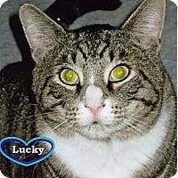 Adopt A Pet :: Lucky - Huntington, NY