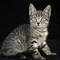 Adopt A Pet :: Jasper - Gainesville, FL