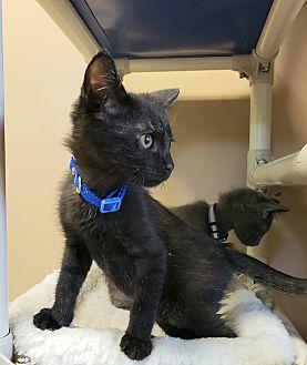 Adopt A Pet :: Ernie  - Germantown, TN