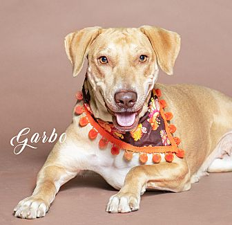 Adopt A Pet :: Garbo  - Houston, TX