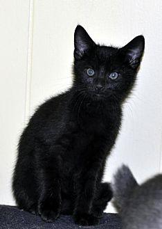 Adopt A Pet :: Knight - adoption pending  - Liberty, NC