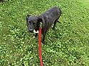 Callie thumbnail image