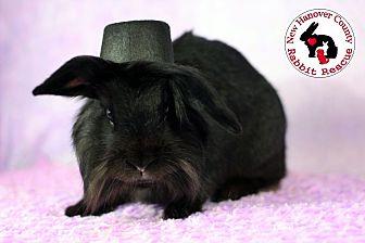 Adopt A Pet :: Licorice  - Wilmington, NC