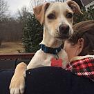 Adopt A Pet :: Hero