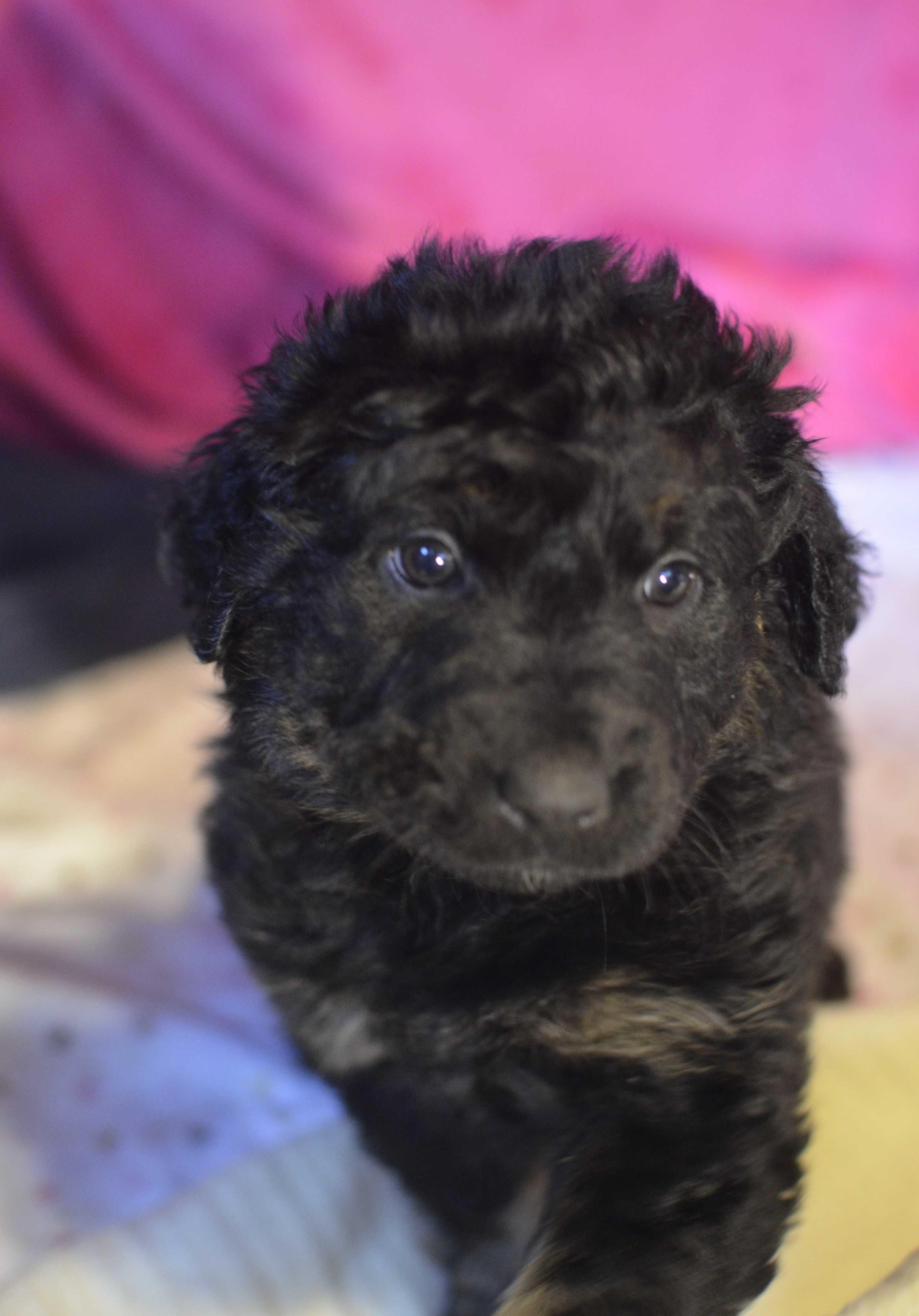 be4416cd89 Meet Betty Boop a Pet for Adoption.