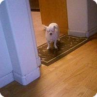 Adopt A Pet :: Stanley - Sacramento, CA