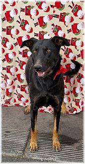 Adopt A Pet :: Diana  - Las Vegas, NV