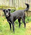 Adopt a Pet :: **CHANCE** - Genesee Depot, WI -  Husky/German Shepherd Dog Mix