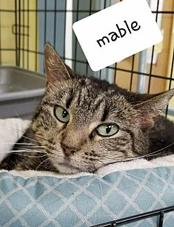 Adopt A Pet :: Mable  - Mt Vernon, IN