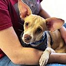 Adopt A Pet :: Tyson