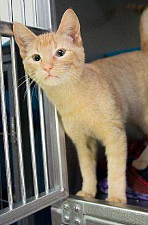Adopt A Pet :: Aldo  - Moose Jaw, SK