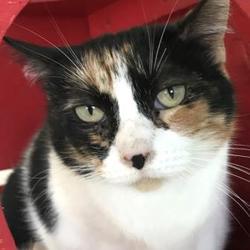 Dorothy O Connor Pet Adoption Center In Victoria Texas