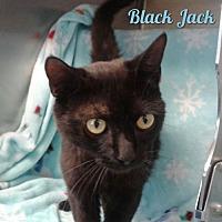 Adopt A Pet :: Black Jack - Harrisville, WV