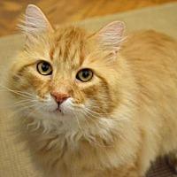 Adopt A Pet :: Charles - New York, NY