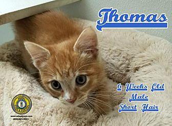 Adopt A Pet :: Thomas  - Nicholasville, KY