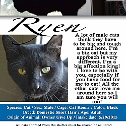 Texarkana, AR - Domestic Shorthair  Meet Ryen a Pet for