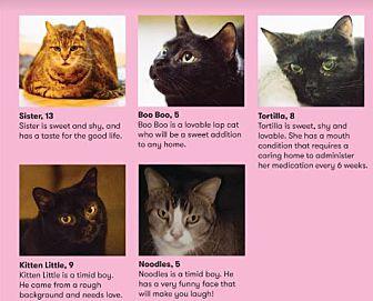 Adopt A Pet :: Charlotte's Cats  - Morganville, NJ