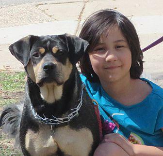 Adopt A Pet :: Blessing  - Saint Paul, MN
