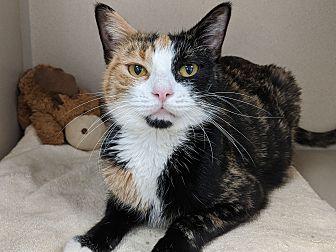 Adopt A Pet :: Sox  - Laramie, WY