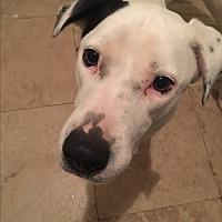 Adopt A Pet :: Oslo - Houston, TX