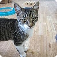 Adopt A Pet :: Jake - Bunnell, FL