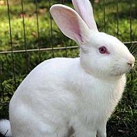 Adopt A Pet :: Sven - Tustin, CA