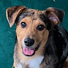 Adopt A Pet :: Brantley B