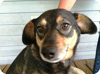 Ocala, FL - Dachshund. Meet Lady a Dog for Adoption.