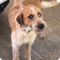 Adopt A Pet :: Mitzi - Newnan, GA