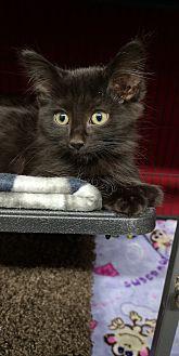 Adopt A Pet :: Molly  - Moose Jaw, SK