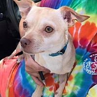 Adopt A Pet :: Ennis - Hooksett, NH