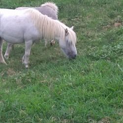 Adopted pets at East Tennessee Miniature Horse and Donkey