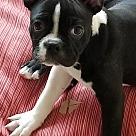 Adopt A Pet :: Dwight