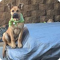Adopt A Pet :: Baxter - Long Beach, CA
