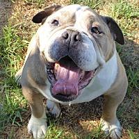Adopt A Pet :: Rocky - Santa Ana, CA