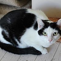 Adopt A Pet :: Lulu - Lutherville, MD