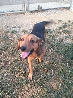 Adopt A Pet :: Arie  - Wilmington, OH