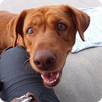 Adopt A Pet :: Bailey:Pending! - Madison, WI