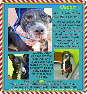 Staffordshire Bull Terrier/Labrador Retriever Mix Dog for adoption in La Crosse, Wisconsin - Oscar