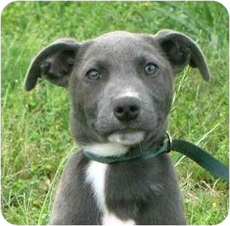 Portsmouth Ri Border Collie Meet Cypress A Pet For Adoption