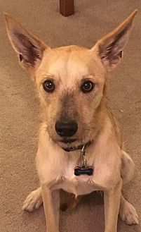 Adopt A Pet :: Tess's Tennessee  - Las Vegas, NV