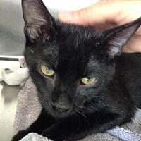 Adopt A Pet :: Raisin - Alamogordo, NM