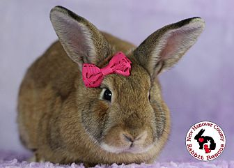 Adopt A Pet :: Strawberry  - Wilmington, NC